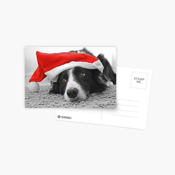 Border Collie Christmas Card - Santa's Little Helper Postcard