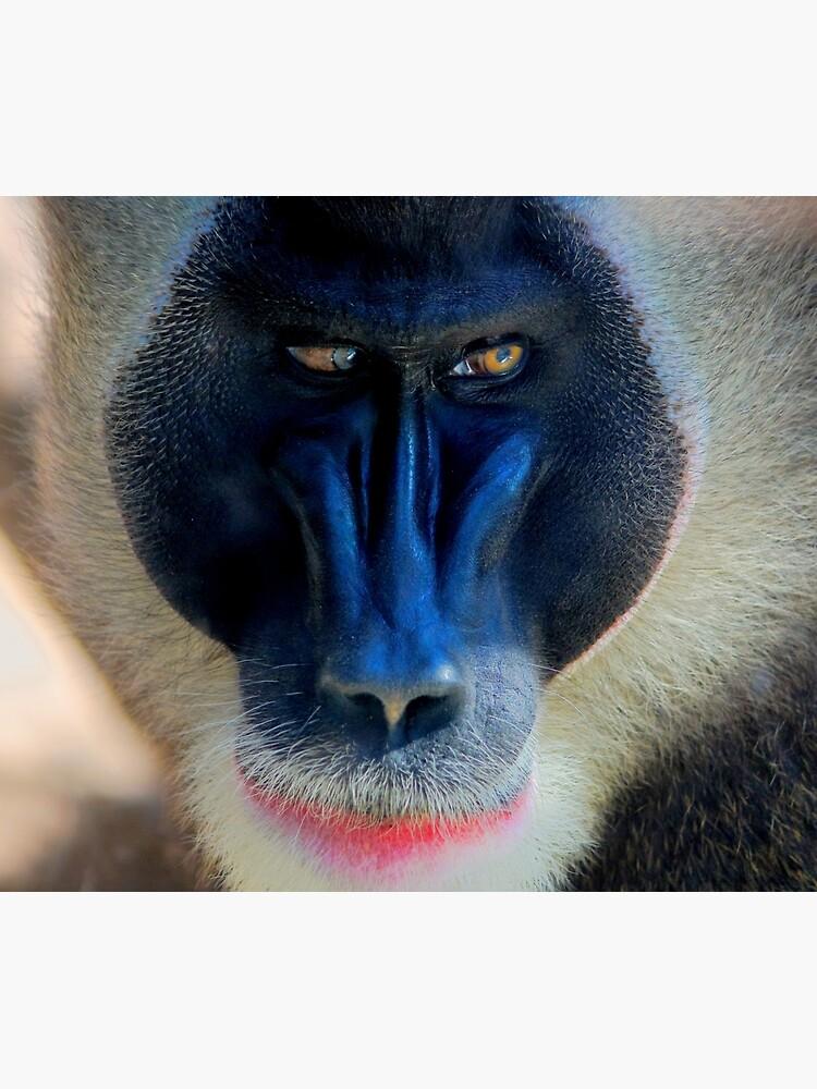 monkey looking right by dirkhinz