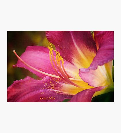 Painted Daylily Photographic Print