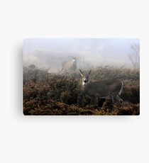 The rut is on! - White-tailed deer  Canvas Print