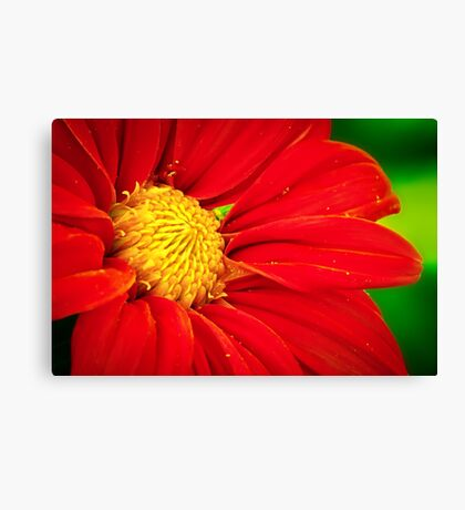 Red Daisy Canvas Print