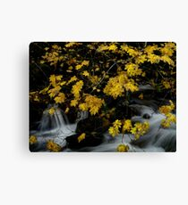 Vine Maple and Water Canvas Print