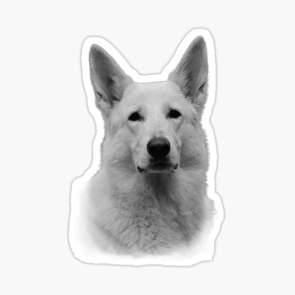 V01 Berger Blanc Suisse Dog Window Decal Gift WHITE SWISS SHEPHERD Car Sticker