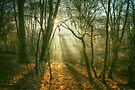 Epping Forest by Nigel Bangert