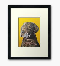 Toby the Chocolate Lab Framed Print