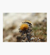 Thistle in Spring Photographic Print
