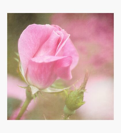 The Rose Speaks of Love Photographic Print