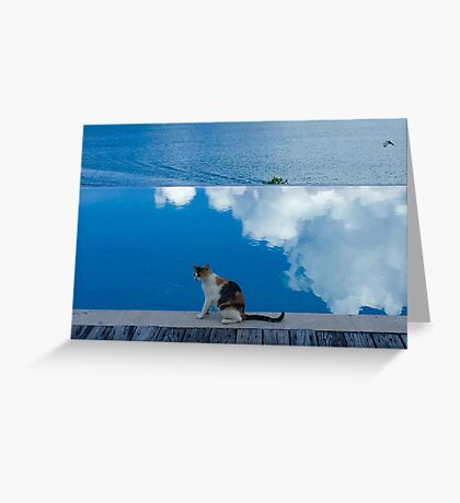 Cat on Blue in Antigua Greeting Card