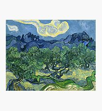 The Olive Trees by Vincent van Gogh Photographic Print