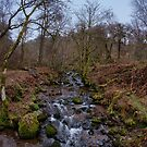 Dollar Glen In Clackmannanshire by Jeremy Lavender Photography