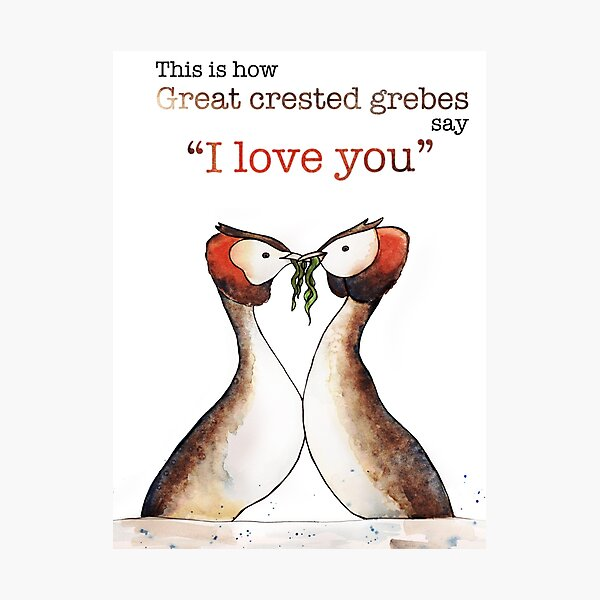 """""""I Love you"""" in Grebe Photographic Print"""