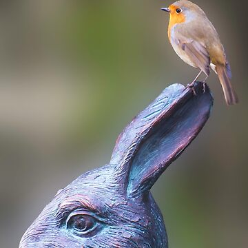 Robin on White Rabbit by TheDabber