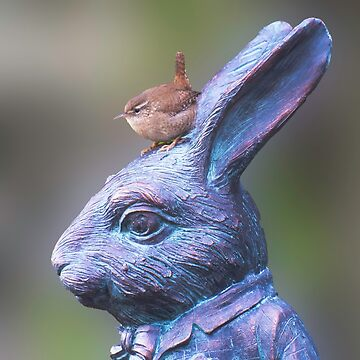 Wren on White Rabbit by TheDabber