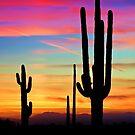 A Southwest Saguaro Sunset  by Saija  Lehtonen