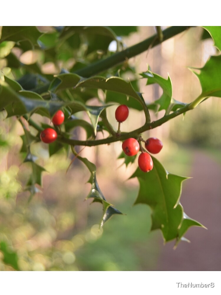 Holly Berries by TheNumber8