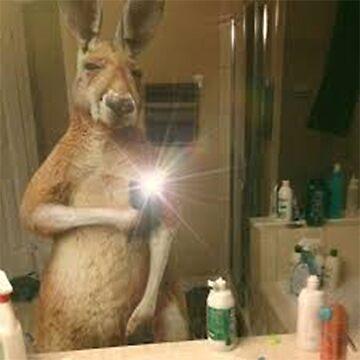 Kangaroo Selfie by rip-harambe