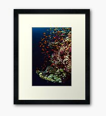 FISH & FORAGE Framed Print
