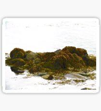 Seaweed covered rocks Sticker