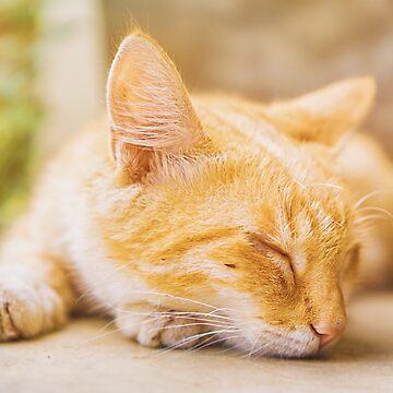 Ghana - Accra - Somewhere Nice - sleeping cat by novopics