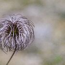 Wispy flower by Martina Fagan