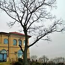 The tree on the Eagle Rock Cliff by the Highlawn Pavilion by Jane Neill-Hancock