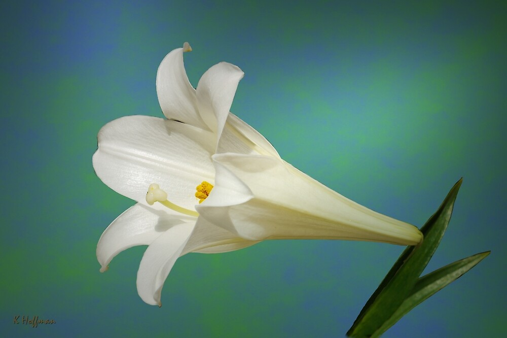 Love Lily by Kenneth Hoffman