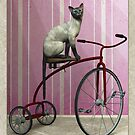 Cat on tricycle by Roberta Angiolani