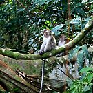 Macaque: in contemplation by David McGilchrist