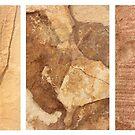 Macro Sandstone Triptych by Kathie Nichols