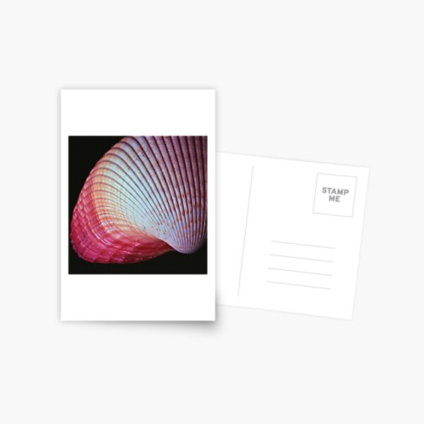 www.lizgarnett.com - uk62932 - pink shell Postcard