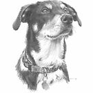 eager dog drawing by Mike Theuer