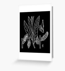Britton And Brown Illustrated flora of the northern states and Canada 1305 Salix humilis02 Greeting Card