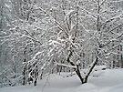 Dogwood in Snow - My Winter Wildflower Garden by MotherNature