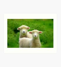 The Red Bubble Definition of Cute! - Lambs - NZ Art Print