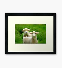 The Red Bubble Definition of Cute! - Lambs - NZ Framed Print