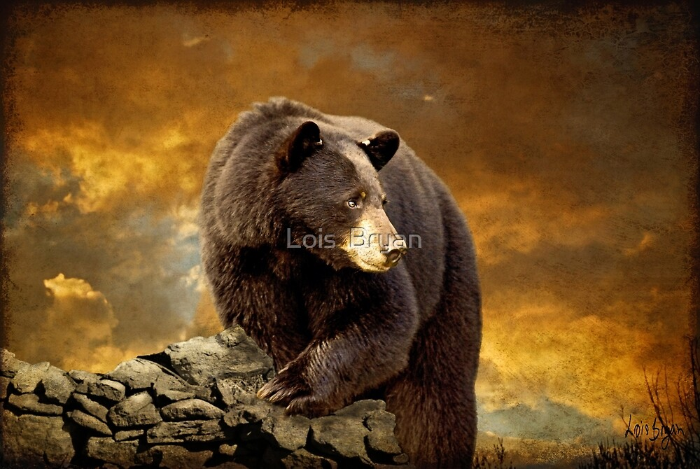 The Bear Went Over The Mountain by Lois  Bryan