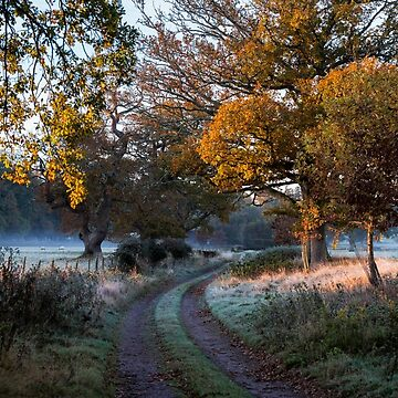 one frosty morning in New Forest by Kerto