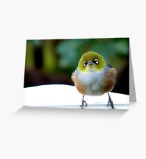 Little boy lost! - Silvereye - Wax Eye - New Zealand Greeting Card
