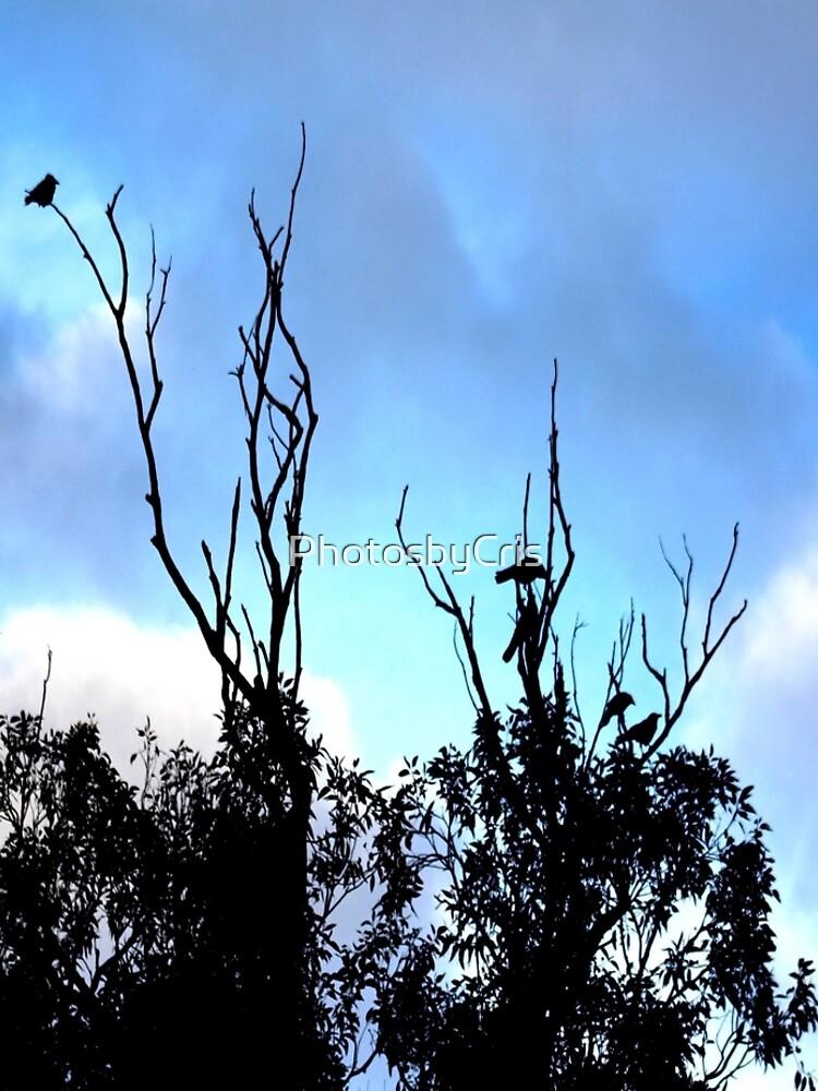 Birds Tree Sky by PhotosbyCris