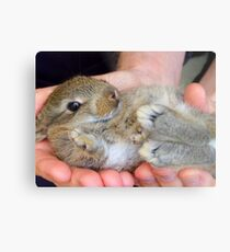 WOW!!- This Is Sooooo Comfy!! - Baby Bunny - NZ Metal Print
