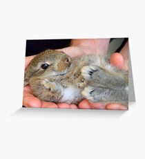 WOW!!- This Is Sooooo Comfy!! - Baby Bunny - NZ Greeting Card