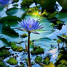 Blue Waterlily by GrowingWild