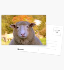I Have My Winter Coat All Sorted... - Sheep - NZ Postcards