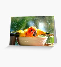 I'm Singing In The Rain..!!! - Sun Conure - NZ Greeting Card