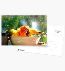 I'm Singing In The Rain..!!! - Sun Conure - NZ Postcards