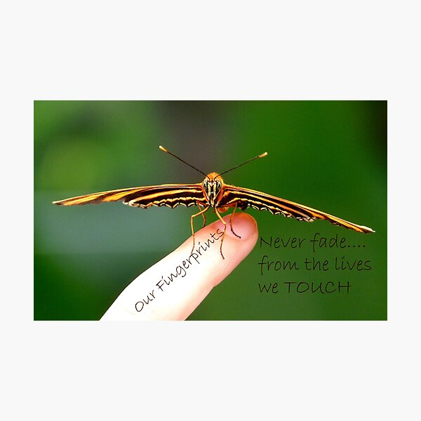 Our Fingerprints Never Fade From The Lives We Touch! - Tiger Butterfly NZ Photographic Print