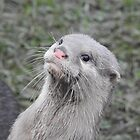 Ash - The cutest otter in town! by wenniewombat