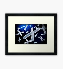 Microscopic view of chromosome. Framed Print