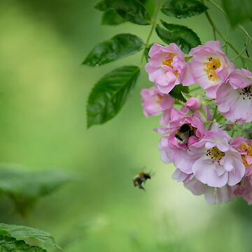 Flight of a bumble bee by Kerto