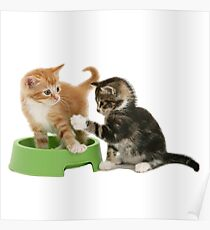 Cats Playing Poster
